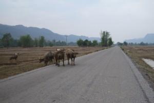 Azijske ceste