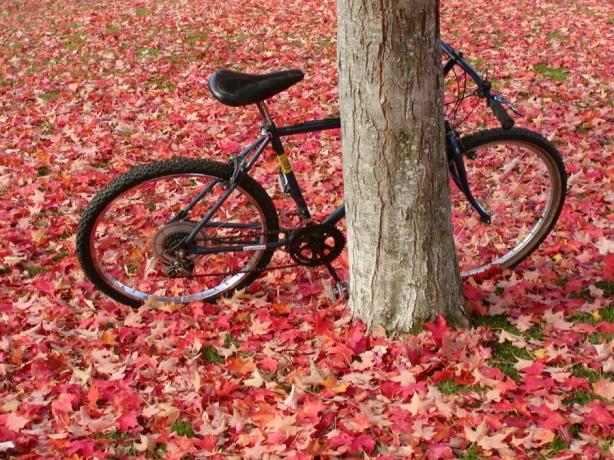 S kolesom v jesen