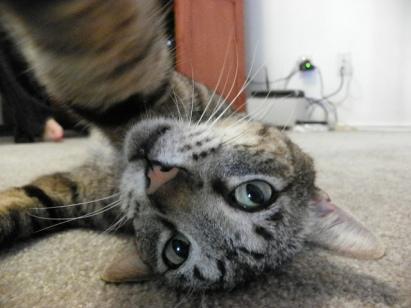 Mačji selfie (Vir: Sandra Jovanovic - Flickr)