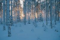 estonia2
